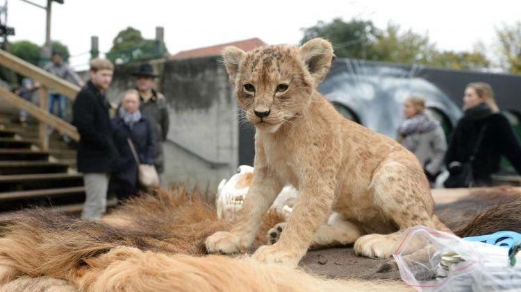 丹麦动物园